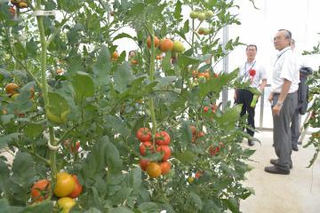 付加価値の高い野菜の栽培方法を研究する実験温室=つくば市天王台