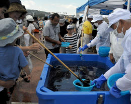 岩手県洋野町で開催された「たねいちウニまつり」=15日