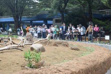 リニューアルしたミーアキャットの展示場=28日、千葉市若葉区の市動物公園