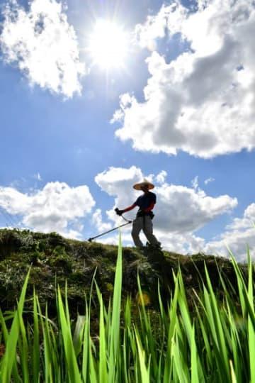 強い日差しの中、草刈りに励む白石凌雲さん=30日、紫波町彦部