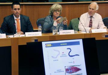 ブリュッセルのEU欧州議会で行われた「ヨーロッパウナギを救え」シンポジウム=6月20日(共同)