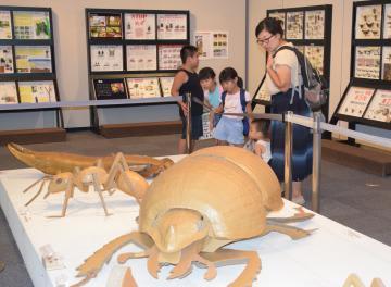昆虫の標本や巨大模型が楽しめる企画展=下妻市長塚乙