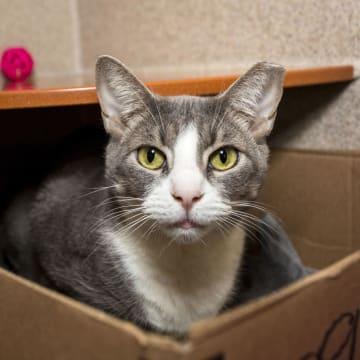 米ワシントン市内で保護された猫(動物愛護団体ヒューマン・レスキュー・アライアンス提供・共同)