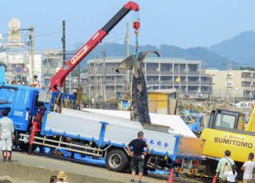 トラックに積み込まれるシロナガスクジラの死骸=6日午後、神奈川県鎌倉市