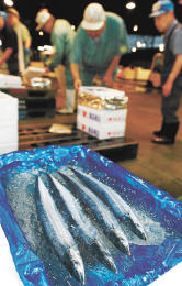サンマが初入荷し、市場関係者が品定めした=7日午前5時30分ごろ、仙台市若林区の仙台市中央卸売市場