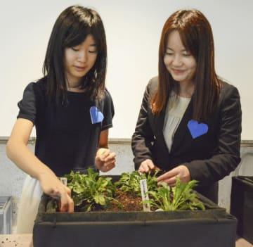 佐藤愛梨ちゃんが最期に見つかった場所に咲いたフランス菊の苗を眺める母美香さん(右)と妹の珠莉さん=9日、東京都千代田区大手町
