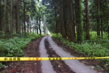 女性の遺体が見つかった現場付近の山林=12日午後6時45分、新潟県十日町市