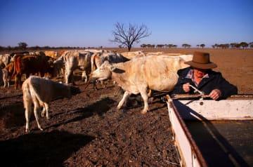 記録的な干ばつに見舞われたオーストラリア東部ニューサウスウェールズ州の牧草地=7月20日(ロイター共同)