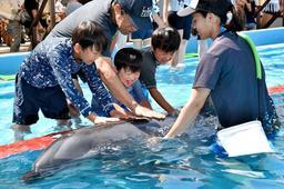 イルカの背中に触れる親子ら=神戸市須磨区若宮町1