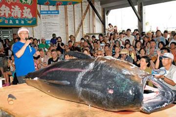 110キロのマグロが登場し、盛り上がった解体ショー=14日、大間町の大間港