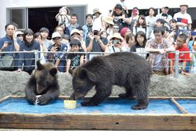 子グマが氷ドキドキ初体験、登別のクマ牧場でイベント