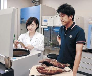 大腸炎予防にヤーコンを 野々市特産野菜で新商品 県立大准教授らとJA研究