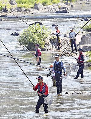 久慈川でアユ釣り大会!8月18日に初開催 東北で最も早く解禁