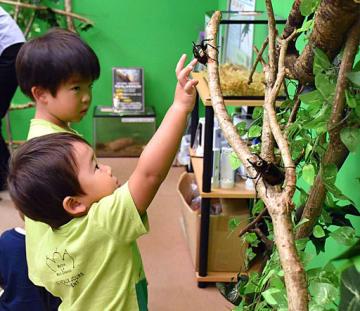 カブトムシを見つけてタッチする子どもたち=15日、境港市の夢みなとタワー