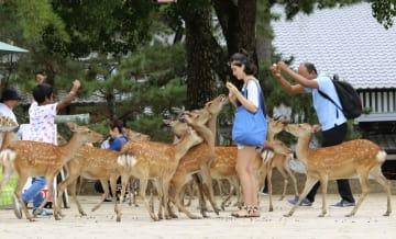 공원 사슴, 역대 최다 1360마리