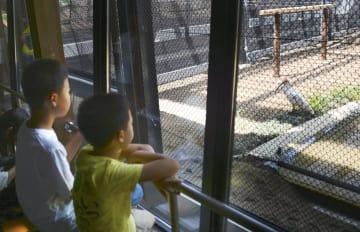 新潟県長岡市の「トキみ~て」で、一般公開されたトキを見る子どもたち=18日午後