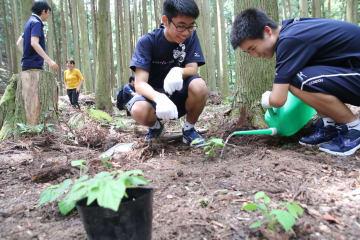 ケヤブハギの苗を植える生徒ら=対馬市北部の山中
