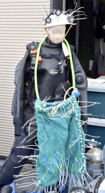 Sea cucumber poaching