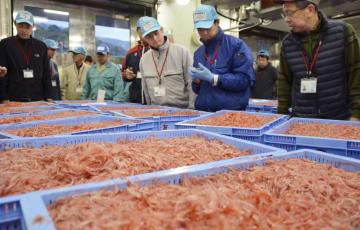 春漁が解禁となり、初競りにかけられるサクラエビ=4月、静岡市の由比漁港