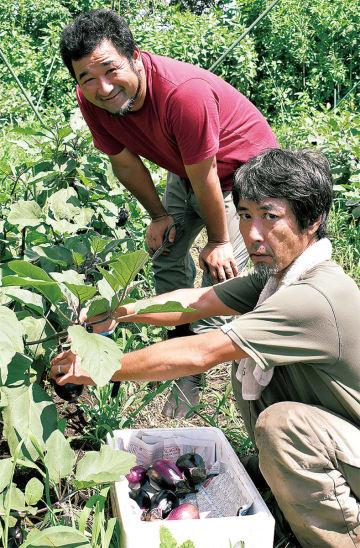 井上さん(上)とナスを収穫する植木さん