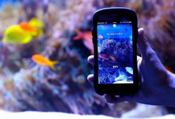 【アイフォンをかざすと生物の名前が分かるアプリ「リンネレンズ」(鳥羽水族館提供)】