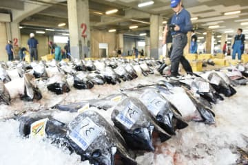 鳥取県の境港で水揚げされ、市場に並べられたクロマグロ=6月