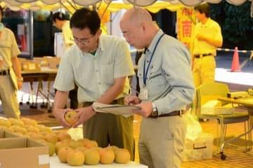 大和市役所で行われた湘南梨の品評会(同市提供)