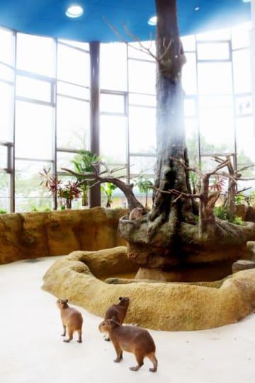 足羽山公園遊園地の「ハピジャン」。動物と同じ空間を共有できる=8月20日、福井県福井市