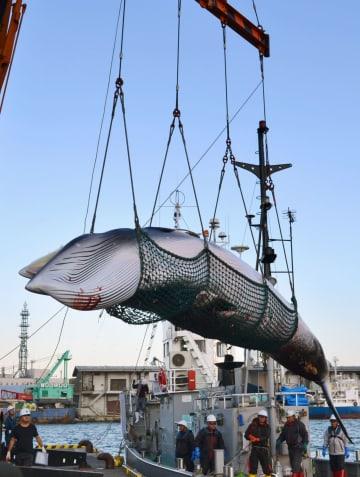 """Research whaling"" starts off Hokkaido"