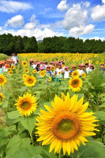 青空のヒマワリ畑で歓声を上げる子どもたち=22日、矢巾町・煙山ひまわりパーク