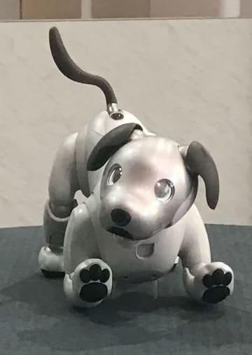 ソニーが米家電見本市「CES」に出展した家庭用犬型ロボット「aibo」=1月、米ラスベガス(共同)