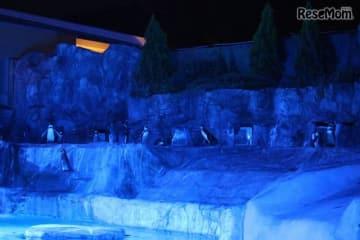 静岡市立日本平動物園「夜の動物園」 ペンギン水槽のライトアップ