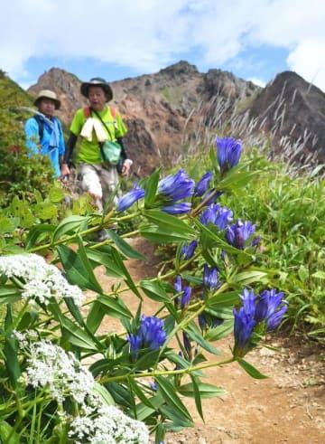 登山道沿いに咲くリンドウ=25日午前10時50分、那須岳