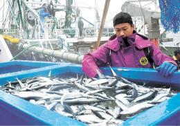 漁船から次々と水揚げされ、市場に運ばれたサンマ=28日午前6時45分ごろ、宮城県女川町