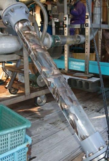 いけすからポンプで吸い上げられる稚魚=和歌山県白浜町