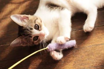 """""""はああかわええええ""""愛猫家が主張! ネコが「世界一かわいい」理由"""