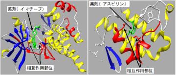 薬剤とタンパク質の相互作用部位の可視化例(写真:産総研の発表資料より)