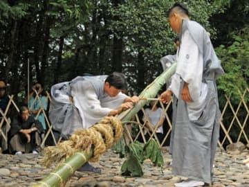 酔ったような足取りでサトイモの長さを測る若者たち(2日午後3時22分、滋賀県日野町中山)