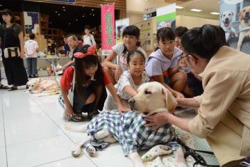 盲導犬と触れ合う来場者たち