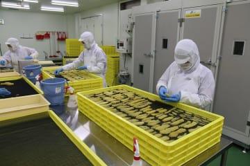 蒸したサツマイモをスライス、乾燥機を使い干し芋を作る従業員=西海市、大地のいのち崎戸工場