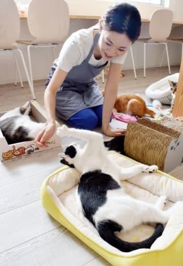 「命のバトンをつなぐ場所にしたい」と話す渡辺七花さん=福井県福井市の譲渡型保護猫カフェ「しあわせにゃん家」