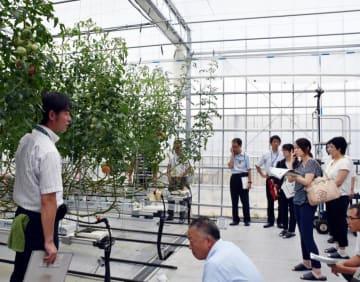 トマトの収量増の研究を進めるスマート園芸技術研究開発拠点