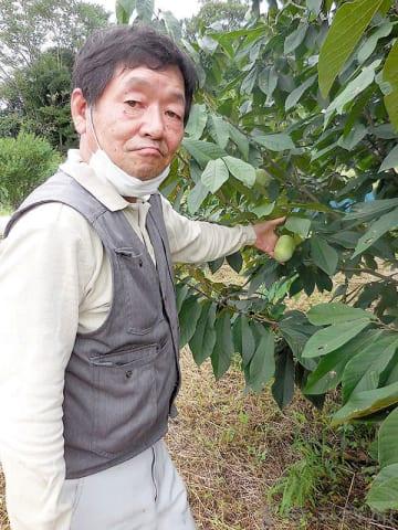 ポポーを栽培する大園孝文さん=埼玉県本庄市の農園