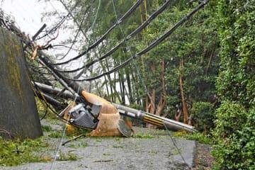 倒木に押し倒された電柱(4日午後3時40分、京都市伏見区桃山町本多上野)