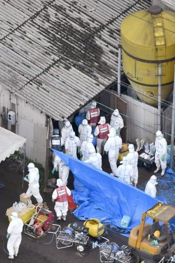 Outbreak of swine fever in central Japan