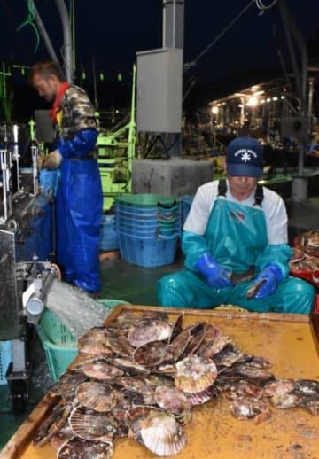 県漁連の新基準により貝柱出荷に向けた作業に励む漁業者ら。ホタテ産業再生へ少しずつ前進する=大船渡市三陸町吉浜