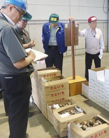 県産サトイモが次々に出荷される中央卸売市場=11日、新潟市江南区