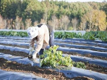 農水省が「農業競争力強化支援法に基づく施行1年後調査」を公表。日本では卸売市場が食品流通の核として機能