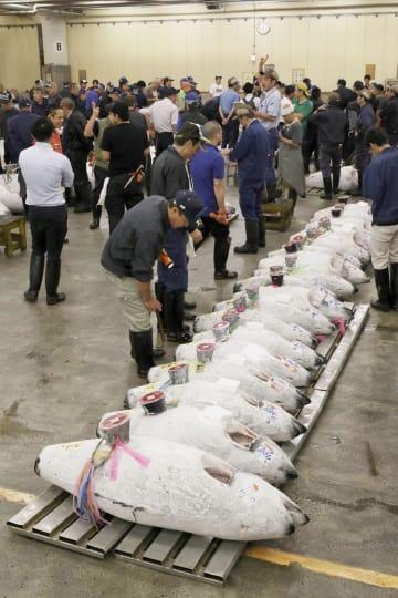 報道公開された冷凍マグロの競り場=14日午前6時3分、東京・築地市場(代表撮影)