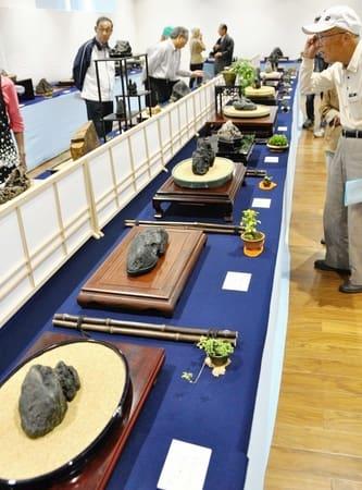 さまざまな形をした石が並んだ水石展=15日、十日町市の「段十ろう」